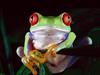 Green_frog80