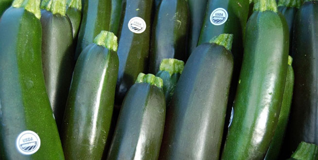 Zucchini-Stories